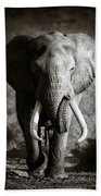 Elephant Bull Bath Towel
