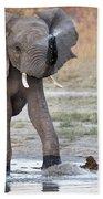 Elephant Calf Spraying Water Bath Towel