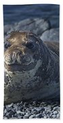 Elephant Seal Pup... Bath Towel