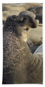 Elephant Seals Bath Towel