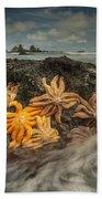 Eleven-armed Sea Stars At Low Tide Bath Towel