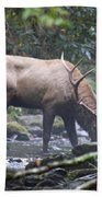 Elk Drinking Water From A Stream Hand Towel