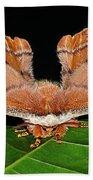 Emperor Gum Moth - 6 Inch Wing Span Bath Towel