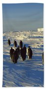 Emperor Penguin Group Walking On Ice Bath Towel