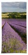 English Lavender Near Alton In Hampshire Bath Towel