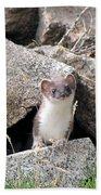 Ermine In Wildlife Bath Towel