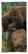 Eurasian Brown Bear 13 Bath Towel
