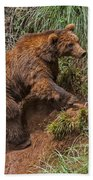 Eurasian Brown Bear 21 Bath Towel