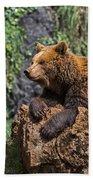 Eurasian Brown Bear 8 Bath Towel