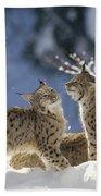 Eurasian Lynx Pair Bayerischer Wald Np Bath Towel