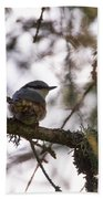 Eurasian Nuthatch Bath Towel