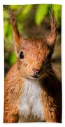Eurasian Red Squirrel Bath Towel