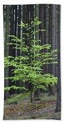 European Beech Tree In Noway Spruce Bath Towel