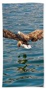 European Flying Sea Eagle 6 Bath Towel