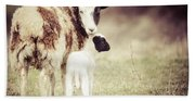 Ewe And Young Bath Towel
