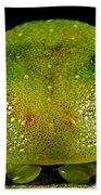 Eye-ringed Bushfrog Bath Towel