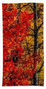 Fall Colors Dp Bath Towel