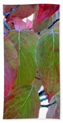 Fall Dogwood Leaf Colors 1 Bath Towel