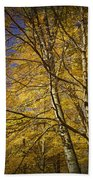 Fall Leaves And Trees In West Michigan No171 Bath Towel