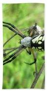 Fall Meadow Spider - Argiope Aurantia Bath Towel