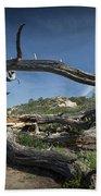 Fallen Dead Torrey Pine Trunk At Torrey Pines State Natural Reserve Bath Towel