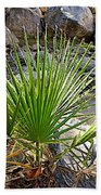 Fan Palm Leaf Over Andreas Creek In Indian Canyons-ca Bath Towel