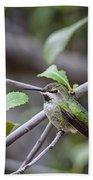 Female Anna's Hummingbird Bath Towel