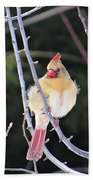 Female Cardinal In Tree Bath Towel