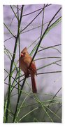 Female Cardinal In Willow Bath Towel