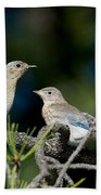 Female Mountain Bluebird With Fledgling Bath Towel