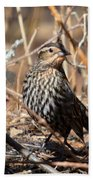 Female Red-winged Blackbird Bath Towel