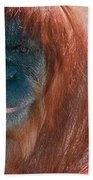 Female Sumatran Orangutan Bath Towel