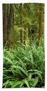 1a2912-ferns In Rain Forest Canada  Bath Towel