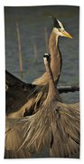 Fighting Great Blue Herons Bath Towel