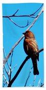 Finch On Branch 031015a Bath Towel