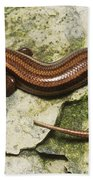 Five-lined Skink Bath Towel