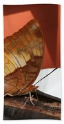 Flame-bordered Charaxes Butterfly #2 Bath Towel