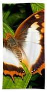 Flame Bordered Charaxes Butterfly Bath Towel