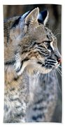 Florida Bobcat Bath Towel