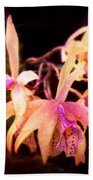 Flower - Orchid - Laelia - Midnight Passion Bath Towel