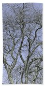 For The Love Of Trees - 2  Bath Towel