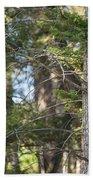 Forest Black Bear Cub Bath Towel