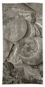 Fossilized Shell - B And W Hand Towel