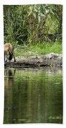 Fox At Water Hole Bath Towel