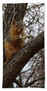 Fox Squirrel 1 Bath Towel