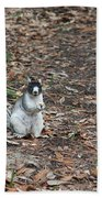 Fox Squirrel Curious Bath Towel