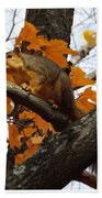 Fox Squirrel In Autumn Bath Towel