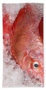 Fresh Fish 05 Bath Towel