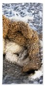 From Bear To Eternity - By William Patrick And Sharon Cummings Bath Towel