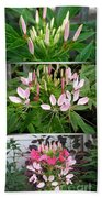From Bud To Bloom - Cleome Named Pink Queen Bath Towel